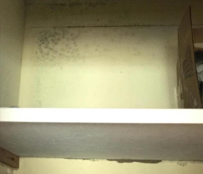 Mold damage in San Mateo