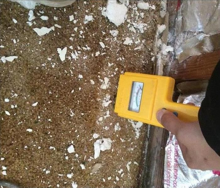 Mold Remediation Burlingame Mold Cleanup